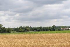Het witte bus drijven naar een dorp Stock Afbeelding