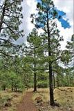 Het witte Centrum van de Bergaard, Pinetop Lakeside, Arizona, Verenigde Staten stock afbeeldingen