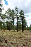 Het witte Centrum van de Bergaard, Pinetop Lakeside, Arizona, Verenigde Staten stock foto