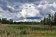 Het witte Centrum van de Bergaard, Pinetop Lakeside, Arizona, Verenigde Staten royalty-vrije stock fotografie