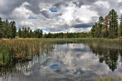 Het witte Centrum van de Bergaard, Pinetop Lakeside, Arizona, Verenigde Staten royalty-vrije stock afbeeldingen