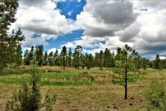 Het witte Centrum van de Bergaard, Pinetop Lakeside, Arizona, Verenigde Staten stock fotografie