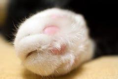 Het witte close-up van de kattenpoot Royalty-vrije Stock Foto