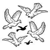Het witte de Duiven van de Huwelijks Vectorvrede Vliegen Stock Afbeelding