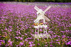 Het witte gebied van de Windmolen en van de Lavendel Stock Fotografie