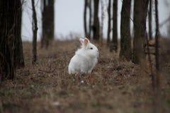 Het witte het konijn van Pasen kijken Stock Afbeelding