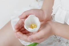 Het witte Hoofd van de Bloem in de Handen van het Meisje Stock Fotografie