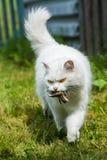 Het witte kat gevangen vogeltje, in aard van honger zal niet sterven stock fotografie