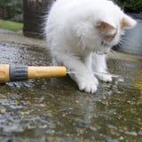 Het witte kat spelen met water Stock Afbeeldingen