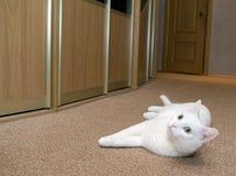 Het witte kat stellen stock afbeelding