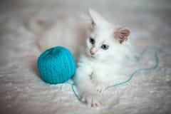 Het witte katje spelen met een verwarring van blauwe draden Stock Foto's