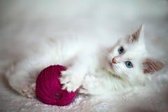 Het witte katje spelen met een verwarring van draden Stock Afbeelding