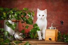 Het witte katje tussen melk kan en koffiemolen Royalty-vrije Stock Fotografie