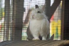 Het witte konijn van de schoonheidsbaby Stock Foto