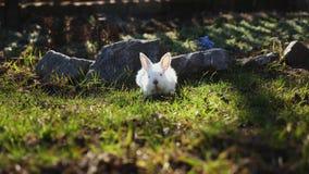 Het witte konijntje van Pasen op het gras stock video