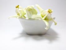 Het witte Kroonbloem bloeien Royalty-vrije Stock Fotografie
