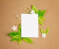 Het Witte lege document blad met de verse groene lente doorbladert borde Stock Afbeelding