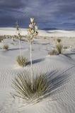 Het witte Nationale Monument van het Zand Stock Afbeeldingen