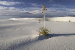 Het witte Nationale Monument van het Zand Stock Fotografie
