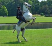Het witte paard grootbrengen omhoog met ruiter in Elizabethaans kostuum stock fotografie