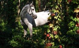 Het witte paard reist stock afbeelding