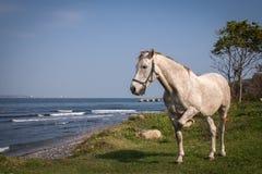 Het witte paard stellen dichtbij overzeese kust stock afbeeldingen