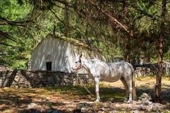 Het witte paard verbergen van hitte in Samaria Gorge op Kreta Stock Afbeeldingen