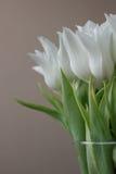 Het witte tulpen bloeien Stock Foto