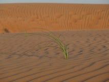 Het woestijnleven Royalty-vrije Stock Afbeeldingen
