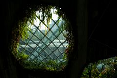 Het Wolkenbos in Singapore stock foto's