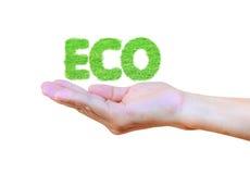 Het woord ECO van het groene die gras op hand op wit wordt geïsoleerd Stock Afbeelding