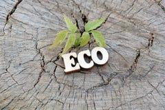 Het woord ECO wordt gemaakt van houten brieven op een oude stomp naast een jonge groene spruit Exemplaarruimte voor ontwerp Het c stock afbeelding