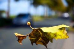 Het wordt de herfst Stock Foto's
