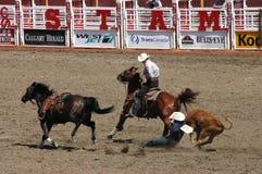Het worstelen van de cowboy jonge os aan de grond stock afbeelding