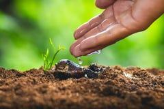 Het Zaad die van de tijdgroei Zaden planten beschermt Jong boompjeSapotilleboom royalty-vrije stock afbeeldingen