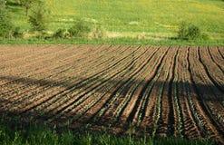 Het zaad en groeit Stock Foto's