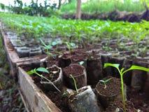 Het zaad van de de groeispaanse peper in landbouwbedrijf stock foto