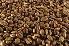 Het zaad van de koffie Royalty-vrije Stock Foto