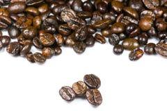 Het zaad van de koffie Royalty-vrije Stock Fotografie