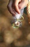 Het Zaad van de Vogel van het huwelijk werpt stock foto's