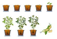 Het zaadspruit van sojabonen in geplaatste pottenpictogrammen, vlakke stijl Stock Afbeelding