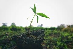 Het zaaien van boom met knappe aardedag in landbouwgrond royalty-vrije stock foto