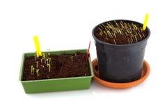 Het zaaien van zaden in de lente stock foto