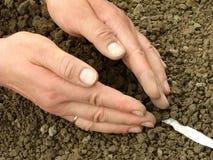 Het zaaien van zaden op band Stock Foto's