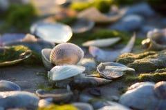 Het zachte licht op de overzeese kust doordringt shells royalty-vrije stock foto's