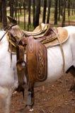 Het Zadel van het paard op een Wit Paard Stock Foto