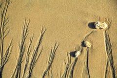 Het Zand die 2 schilderen Stock Fotografie