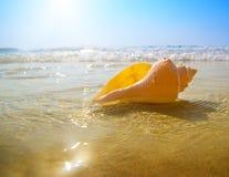 Het zand en de oceaan van de zeeschelp Stock Fotografie