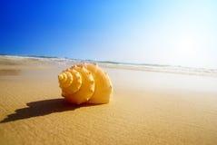 Het zand en de oceaan van de zeeschelp Stock Afbeeldingen