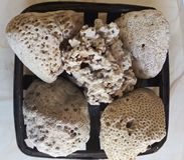 Het zand op de kust wordt samengesteld uit shell en gemalen koraal, dat het comfortabel schoon maakt, wit en royalty-vrije stock afbeelding